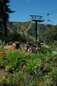 Summer photo at Deer Valley