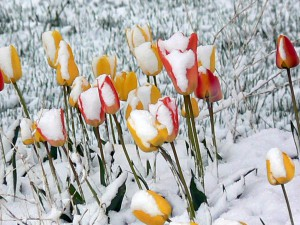 An occasional dusting of snow is typical for Park City's springtime landscape