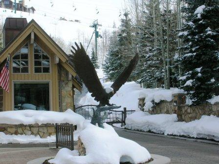 Bald Eagle at Deer Valley